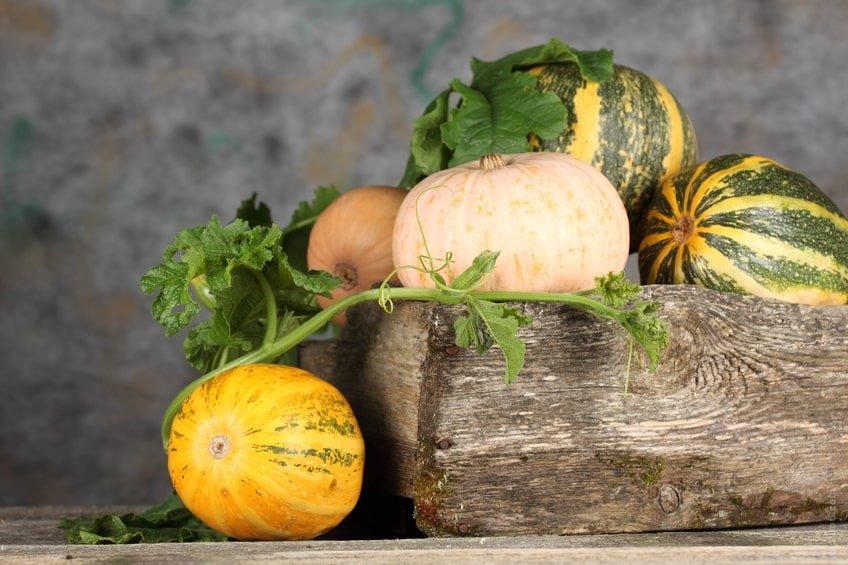 denrées alimentaires, stockage, contamination, restaurant