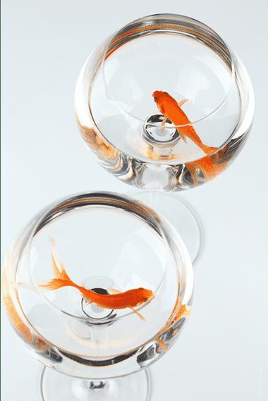 poisson, sous-vide, conservation, DLC, DLUO, restauration, restauration, formation hygiène alimentaire