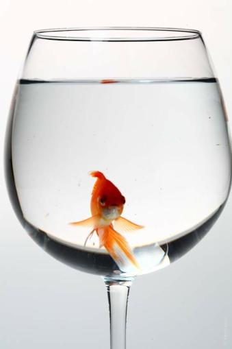 poisson frais, DLC, durée de conservation, DLUO